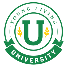 YL University Logo learn more at www.YLEOTeam.com/YL-University