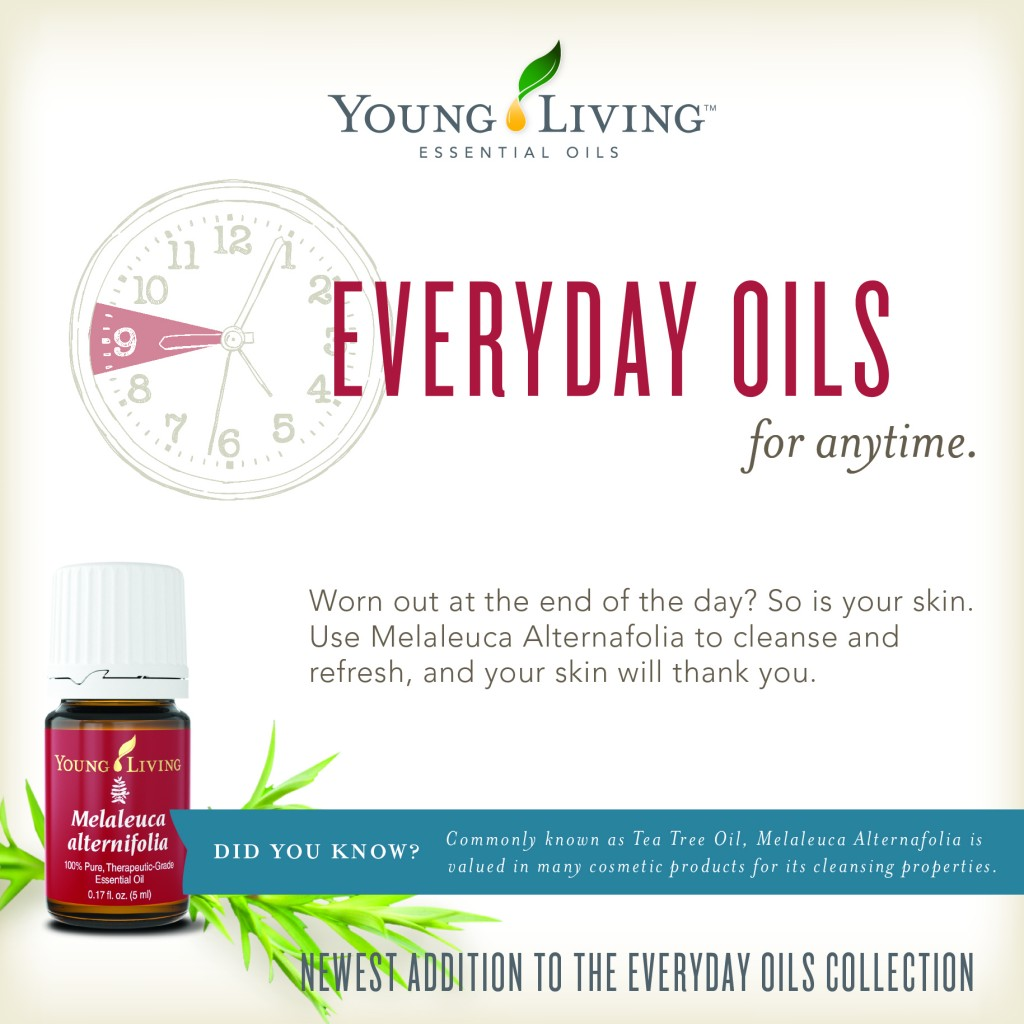 Everyday Oils Infographic Young Living Melaleuca A Tea Tree Oil - YLEOTeam #oilyfamilies