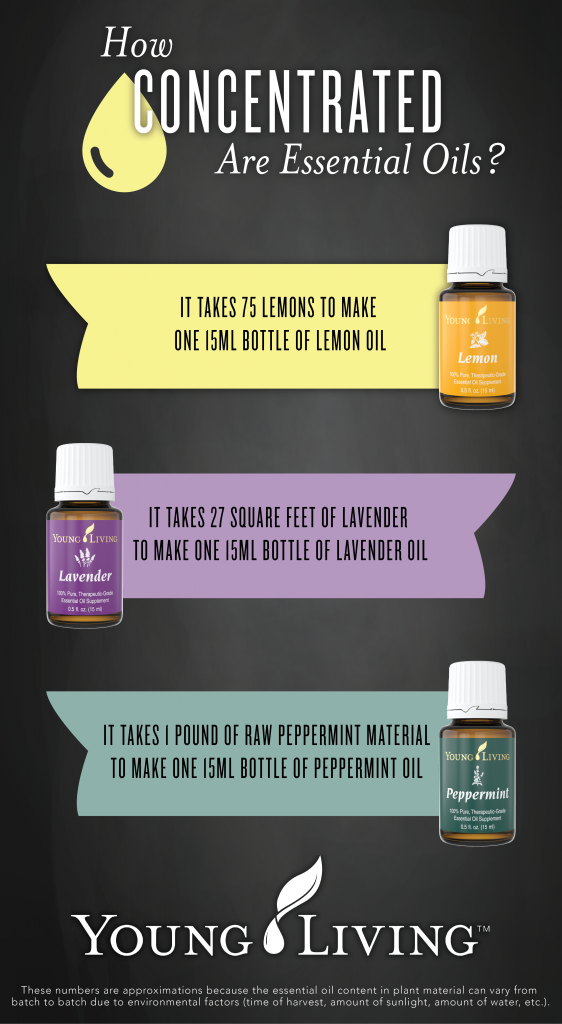 Interesting Facts - Did you Know about Essential Oils Young Living University YLEOTeam #oilyfamilies